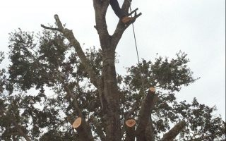 tree trimming property enterprise services llc